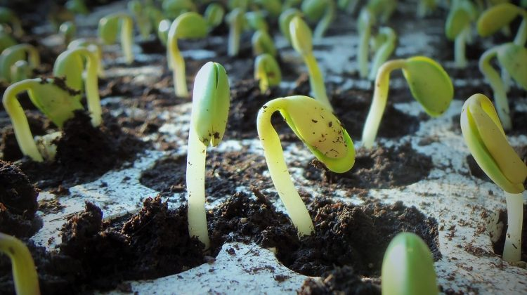 seed trials