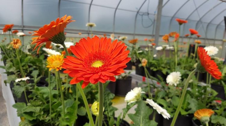 farmforest greenhouse facility